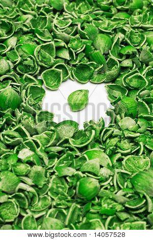green hazelnuts