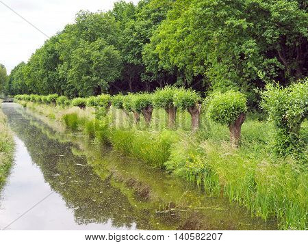 Landscape: at the countryside with Ditch, Trees reflecting in the Water
