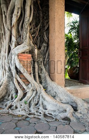 Roots that imprison a red brick pillar