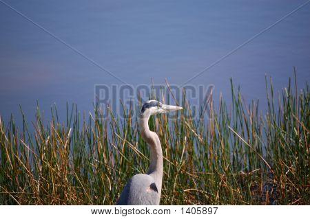Florida Bird #2