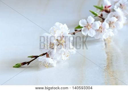 Branch of cherry blossom on wet surface symbol of spring freshness beauty and purity spa background