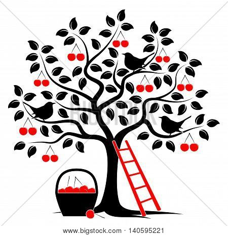 vector cherry tree with birds, ladder and basket of cherries isolated on white background