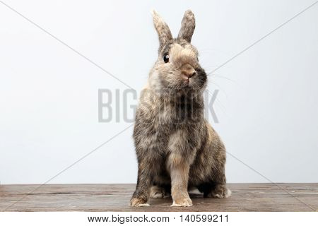 Cute Little rabbit with Brown Fur Sitting on Wood and frightened, white Background