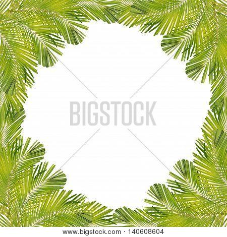 Palm leaf frame isolated on white background