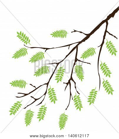 vector illustration of a tree branch with green leaves