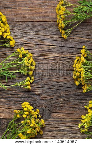 Flowers of tansy on the wooden background top view. Medicinal plants