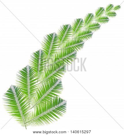 Palm leaf pattern isolated on white background