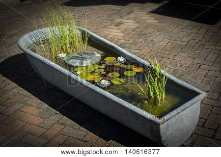 flowers floating on water in bath pots at the luxury garden