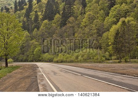 Lonely road in May green Carpathians Ukraine