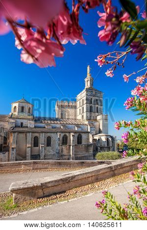 Avignon Cathedral With Flowers In Provence, France