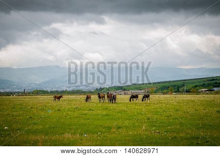 Green pastures of horse farms. Summer landscape with the mountains stood out against the skyline.