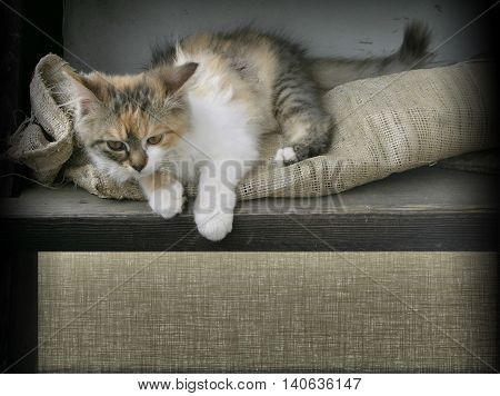 Cute kitty guards burlap space for your text