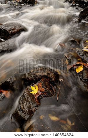 Autumn Leaves and Flowing Rapids of a Stream