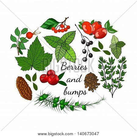 Set of forest berries and bumps in autumn style. Leaves, pine cones and berries