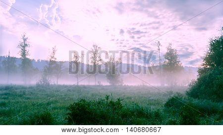 Beautiful landscape with dawn mist and morning dew. Summer idyllic beautiful landscape.