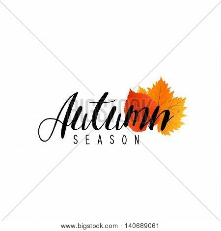 Autumn new season of sales and discounts, deals and offer. Painted lettering with his hands. Label and banner template with yellow red leaves.