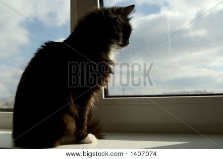 House Cat Looking Out Of The Window