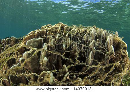 Environmental damage: ghost fishing net snagged on coral reef