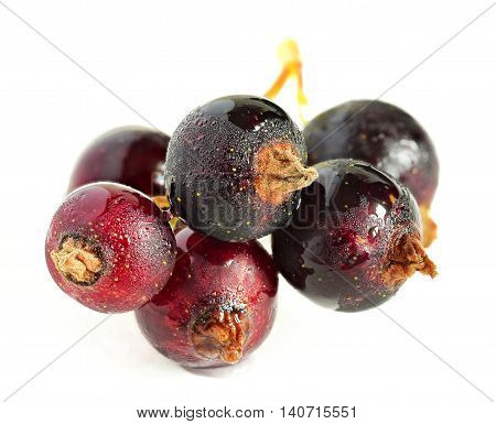 currant closeup. black currant on a white background