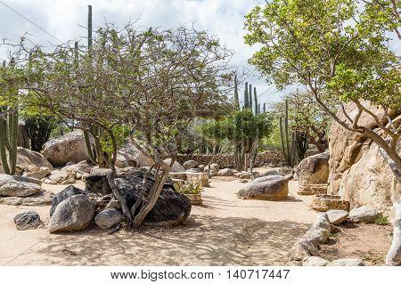 Boulders Divi Divi Trees and Cactus in Aruba Garden