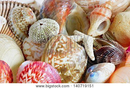 Shell close up. Multi-colored sea shells and molluscs