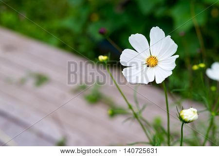 one decorative white flower is located separately a closeup on an indistinct background