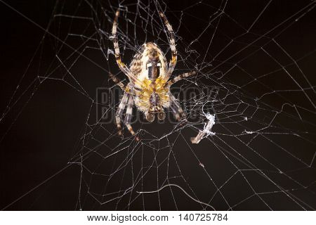 Large Spider On A Spiderweb