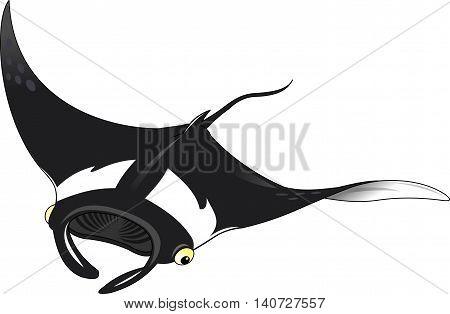 Black stingray on white background vector and illustration