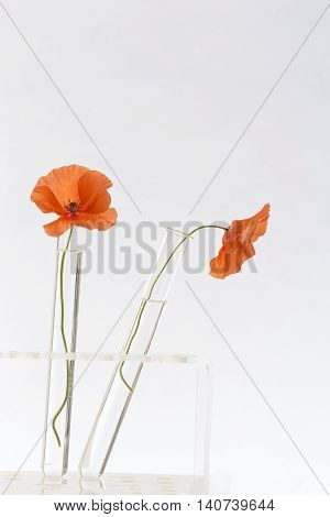 Poppy in test tube for herbal medicine and essential oil