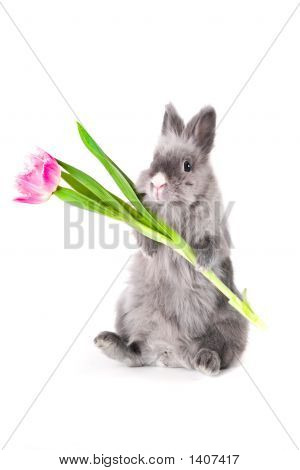 Bunny Holding A Tulip
