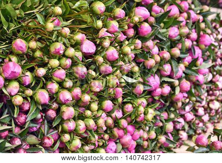 Heap of buttercup flowers at a flower market stall. Outdoor market with a stack of fresh pink flowers.