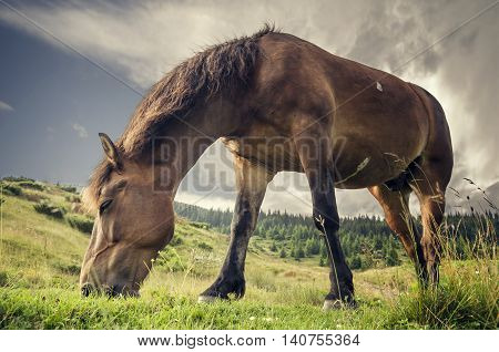 Muscular horse eating grass on the background of a mountain landscape. Photo shot from an unusual angle.