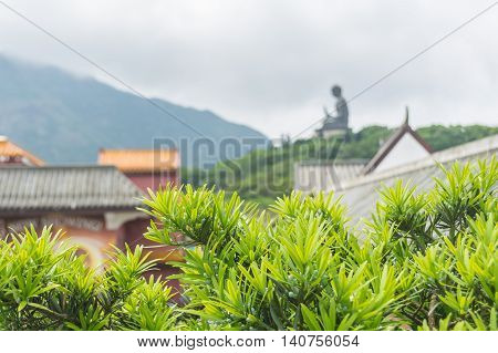 Colorful green leaves and blurry Tian Tan Buddha as background in cloudy day.