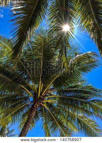 The sun shines through palm tree leaves