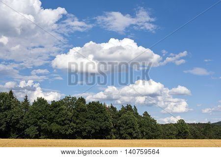 Summer landscape with white clouds on the blue sky and a forest and a field
