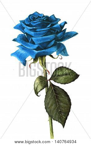 Single blue rose, hand painted with watercolours.