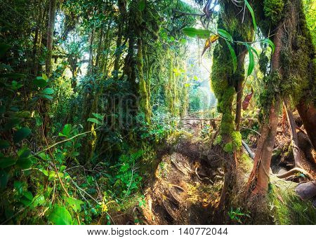 Fantasy Mystical Mossy Forest Nature. Malaysia