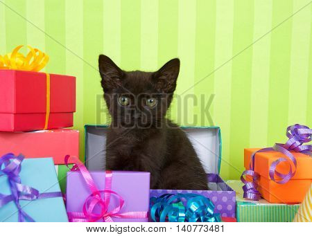 Black kitten sitting in an open present box birthday party theme with many colorful presents with ribbons green striped background with copy space