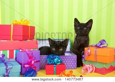 Black kitten laying in an open present box with sibling sitting next to her birthday party theme with many colorful presents with ribbons green striped background with copy space