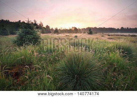 purple summer sunrise on green meadow Netherlands
