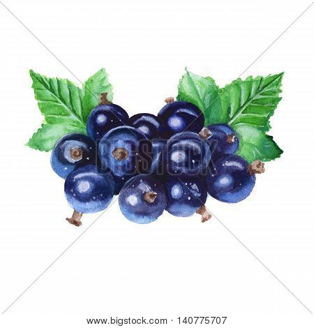 Black currant with leaves. Isolated. Watercolor illustration.