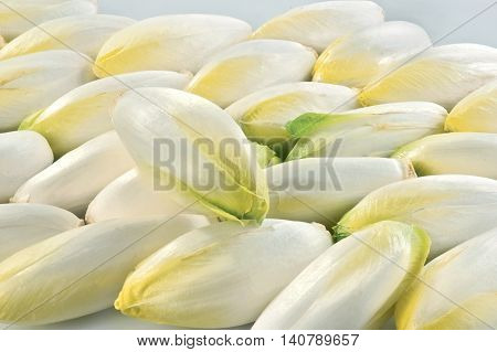 Chicory isolated on white background raw food vegetable