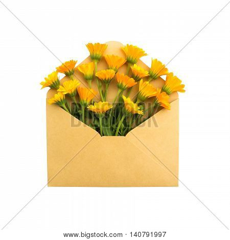 calendula in the envelope. isolated on white background. love letter. healing flowers.