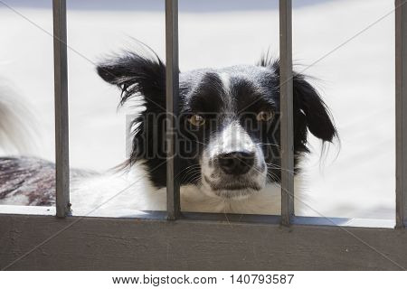 dog behind the bars of the gate