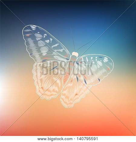 Hand-drawn beautiful tropical butterfly. Element for design. Vector illustration.