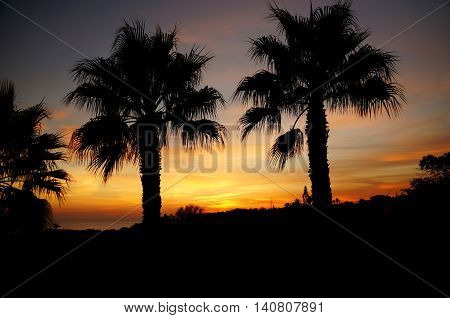 Black silhouettes of two palm trees. The sky is colored in red and gold colors by the sunset. In the background a sea and the silhouettes of more vegetation can be seen. Algarve, Portugal.