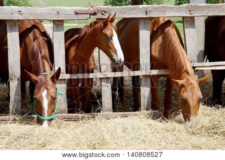 Horses eating grass behind old wooden fence
