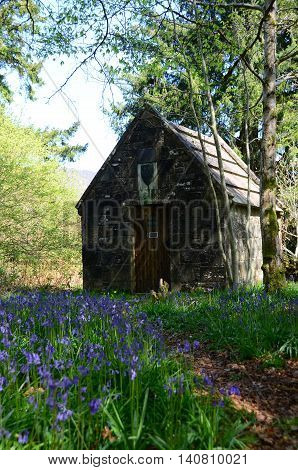 A carpet of bluebells line the forest floor around the mausoleum at Inchmahome priory