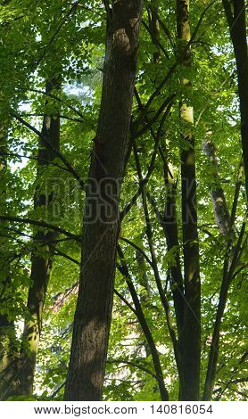 Squirrel on the nature of the sanatorium in the city of Lviv