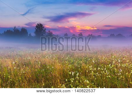 Wild Foggy Meadow Landscape